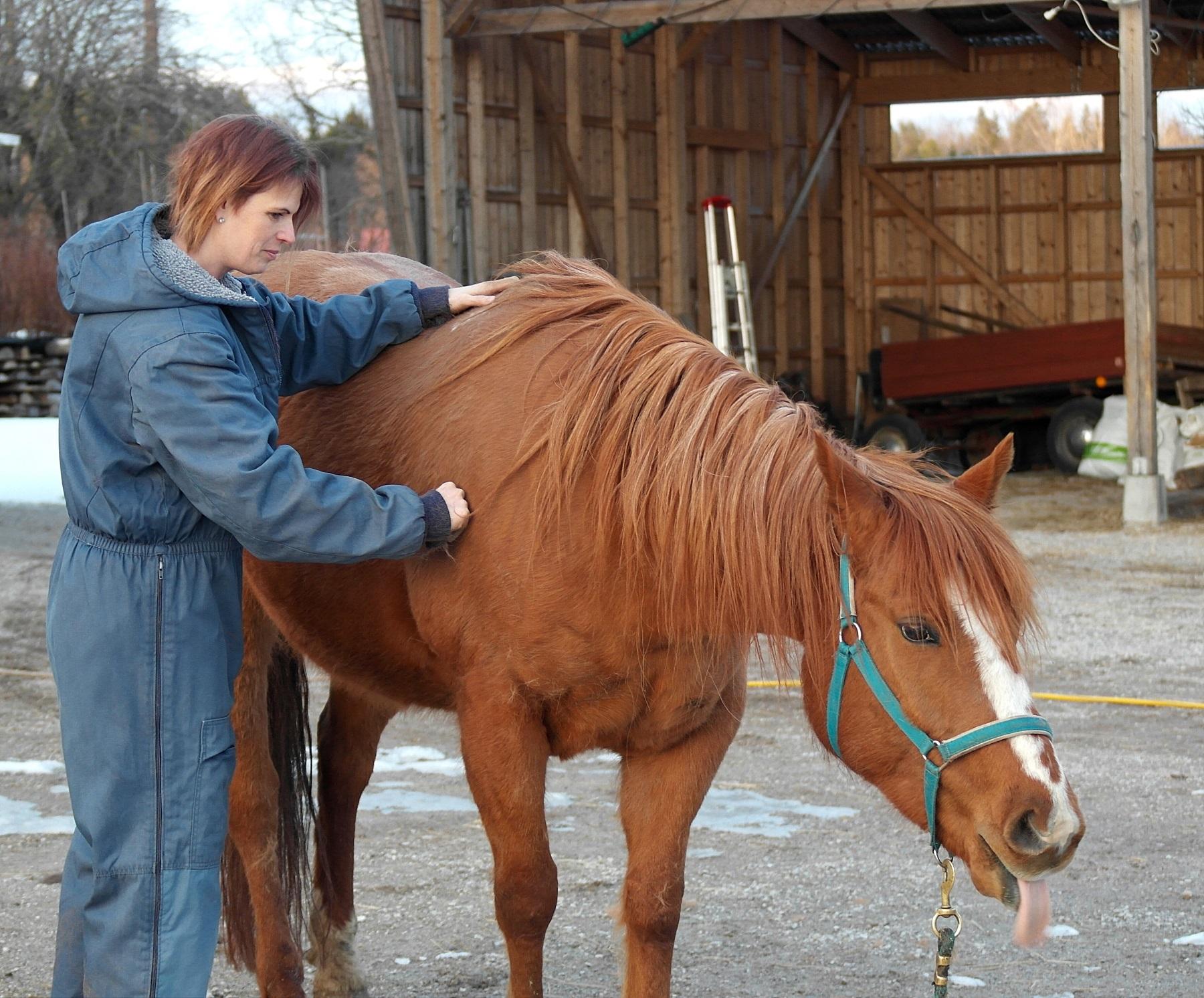 Cecilia ger hästmassage