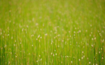 Att vara ett grässtrå av Cecilia Målare